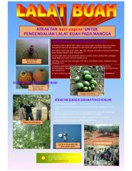 lalat buah.pdf