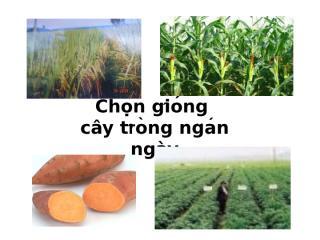 3- Chon tao giong cay ngô.ppt