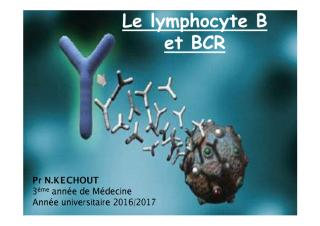 med_3an16_immuno_lymphocytes_b.pdf
